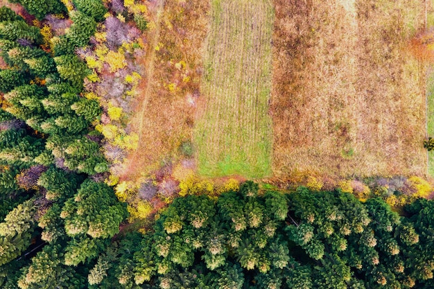 Vista aérea da floresta de pinheiros da montanha com área de desmatamento de árvores cortadas.