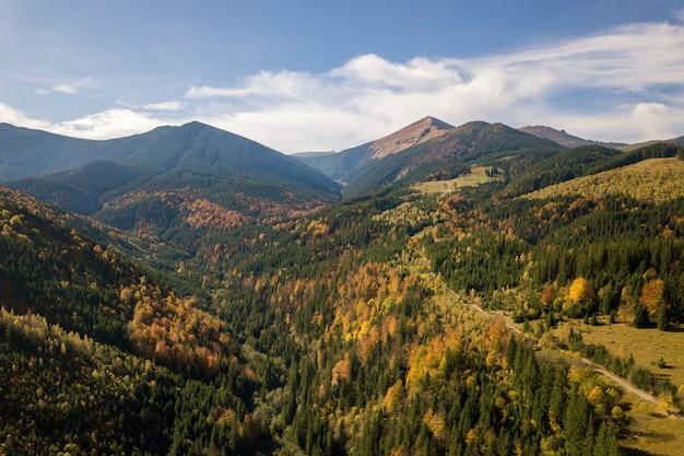 Vista aérea da paisagem de montanha outono com pinheiros sempre-verdes e floresta de outono amarelo com montanhas magestic na distância.