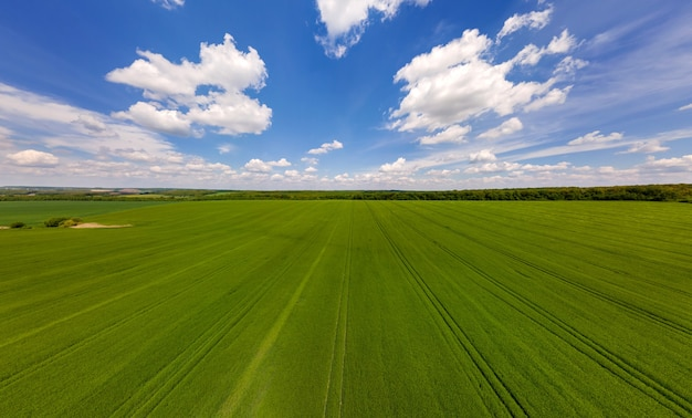 Vista aérea da paisagem de verdes campos agrícolas cultivados com safras em dia de verão brilhante.