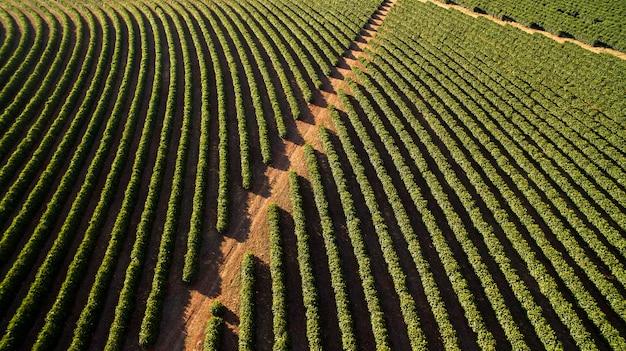 Vista aérea da plantação de café em minas gerais - brasil