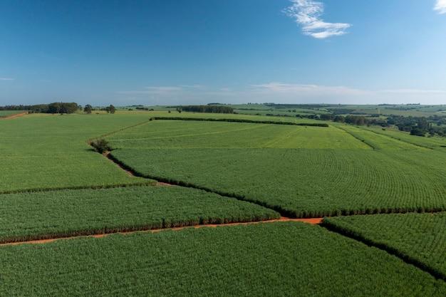 Vista aérea da plantação de cana-de-açúcar em um dia ensolarado no brasil.