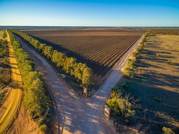 Vista aérea da vinha de inverno ao pôr do sol