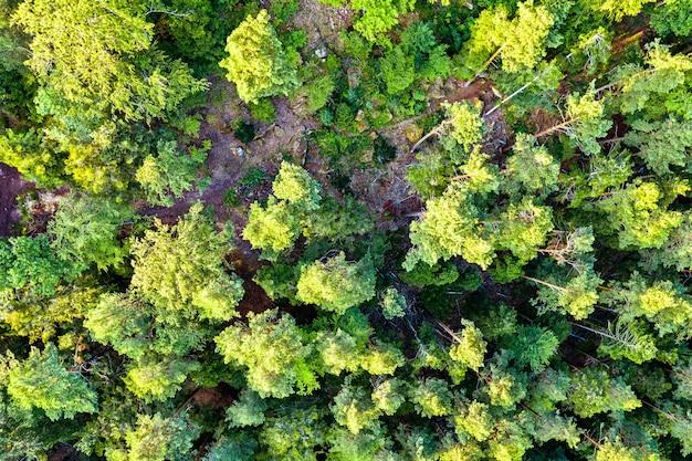 Vista aérea das árvores nas montanhas de vosges no verão. alsácia, frança