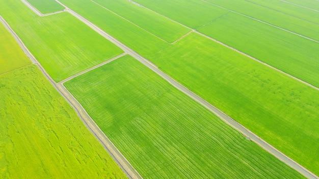 Vista aérea, de, a, amarela, e, verde, arroz, campos