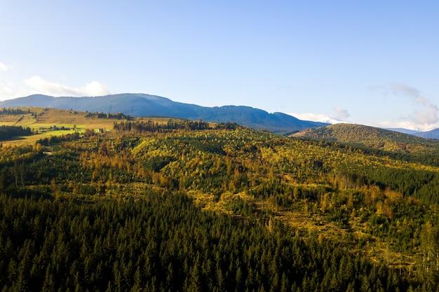 Vista aérea de abetos verdes brilhantes e árvores amarelas de outono na floresta de outono e montanhas altas distantes.