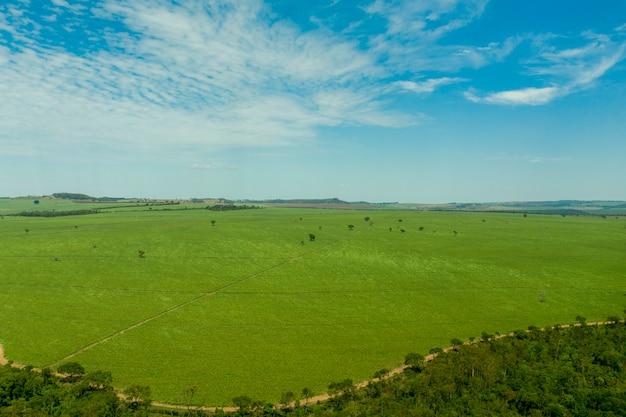 Vista aérea de área com floresta e plantação de cana-de-açúcar no brasil