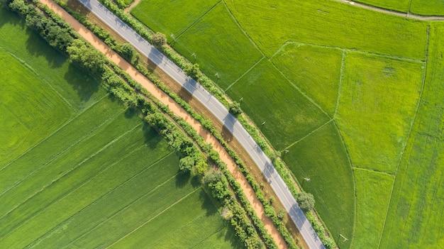 Vista aérea, de, arroz verde, campos, com, estrada, em, tailandia
