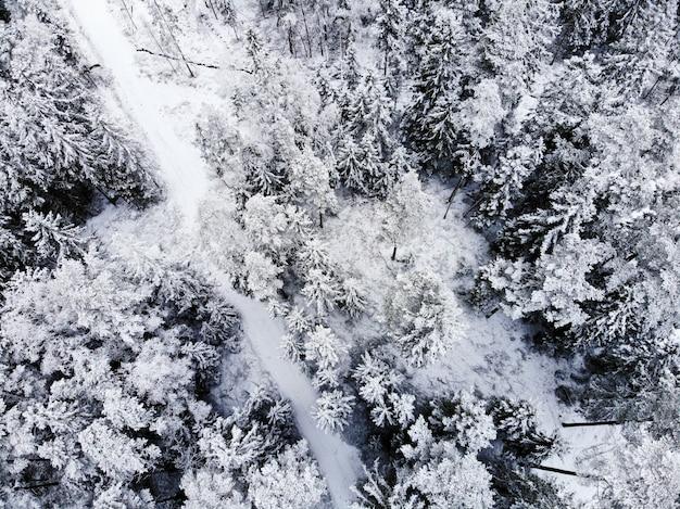 Vista aérea de árvores cobertas de neve