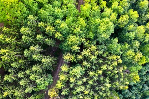 Vista aérea de árvores nas montanhas de vosges - alsácia, frança