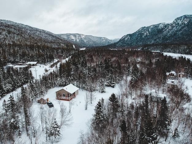 Vista aérea de árvores no inverno