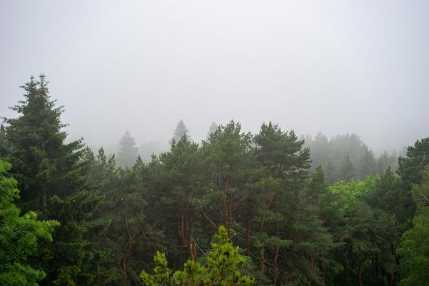 Vista aérea de árvores verdes de verão na floresta nas montanhas. madeiras de árvores da floresta.
