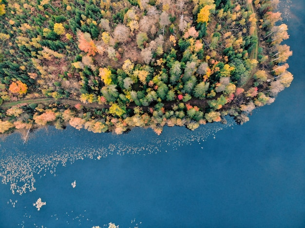 Vista aérea de árvores