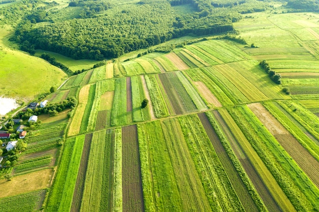 Vista aérea de campos agrícolas verdes na primavera com vegetação fresca após a semeadura de estação em um dia ensolarado e quente.