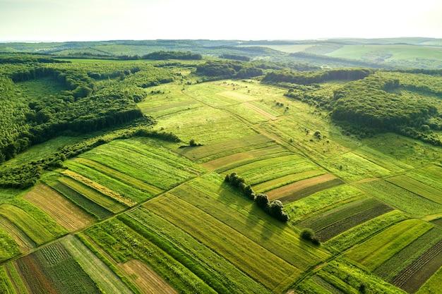 Vista aérea de campos agrícolas verdes na primavera com vegetação fresca após a temporada de semeadura em um dia quente e ensolarado.
