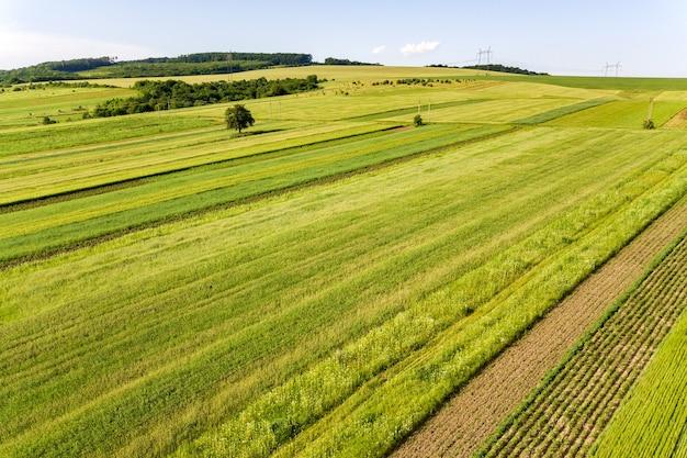 Vista aérea de campos agrícolas verdes na primavera com vegetação fresca