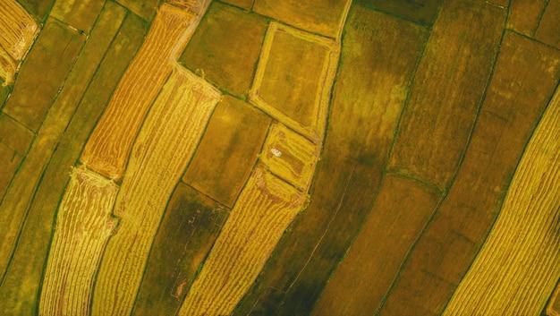 Vista aérea de campos de arroz colhidos com uma colheitadeira