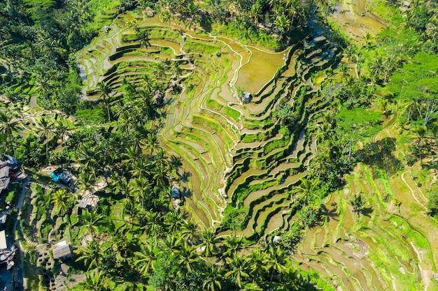 Vista aérea de campos de arroz em socalcos em bali, indonésia