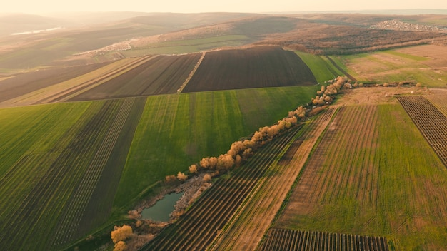 Vista aérea de campos de trigo