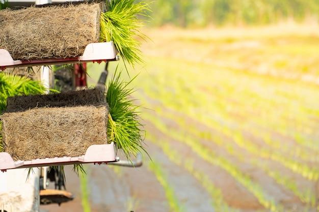 Vista aérea, de, cana-de-açúcar, plantação