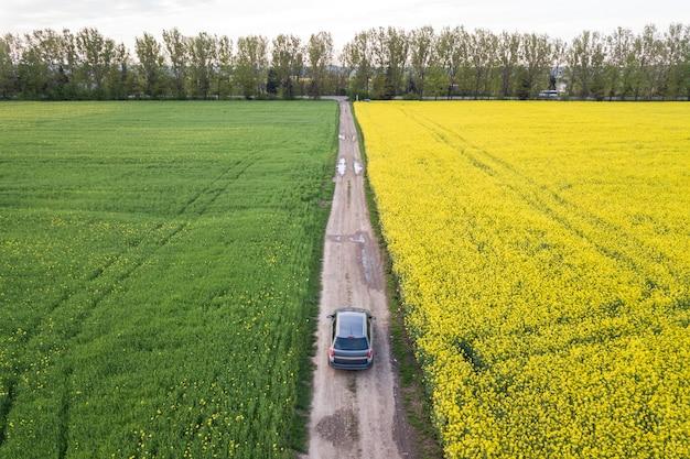 Vista aérea de carro pela estrada de terra reta através de campos verdes com plantas florescendo colza em dia ensolarado. fotografia de zangão.