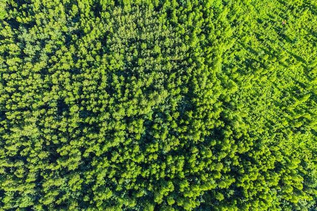Vista aérea de cima de árvores verdes de verão na floresta. fotografia drone