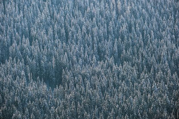 Vista aérea de cima para baixo da floresta de pinheiros perenes coberta de neve após uma forte queda de neve na floresta de montanha de inverno em um dia frio e tranquilo.