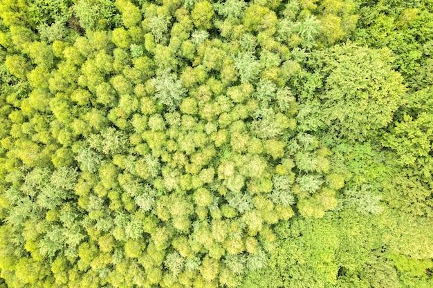 Vista aérea de cima para baixo da floresta verde de verão com copas de muitas árvores frescas.
