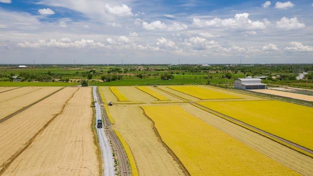Vista aérea, de, colheitadeira, máquina, trabalhando, em, campo arroz, de cima
