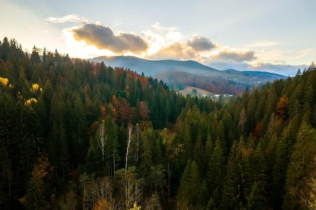 Vista aérea de colinas de alta montanha cobertas por densa floresta amarela e árvores verdes spruce no outono.