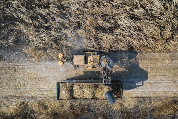Vista aérea de cortadores de cana de açúcar estão trabalhando ao ar livre