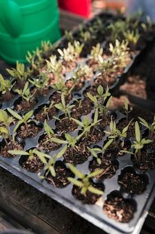 Vista aérea, de, crate, com, seedling