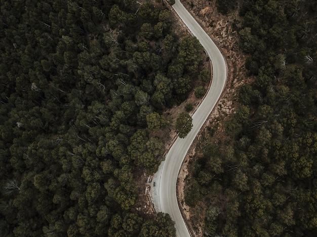 Vista aérea, de, curva, estrada, através, floresta, paisagem