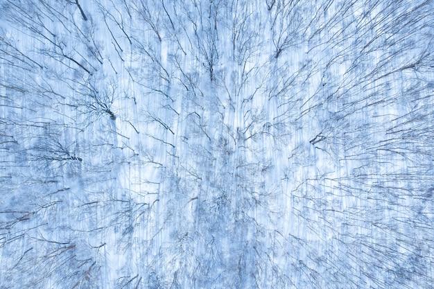 Vista aérea, de, floresta inverno, coberto, por, neve, vista, de, zangão
