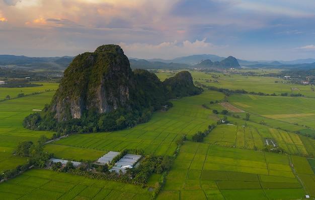 Vista aérea de grandes campos de arroz