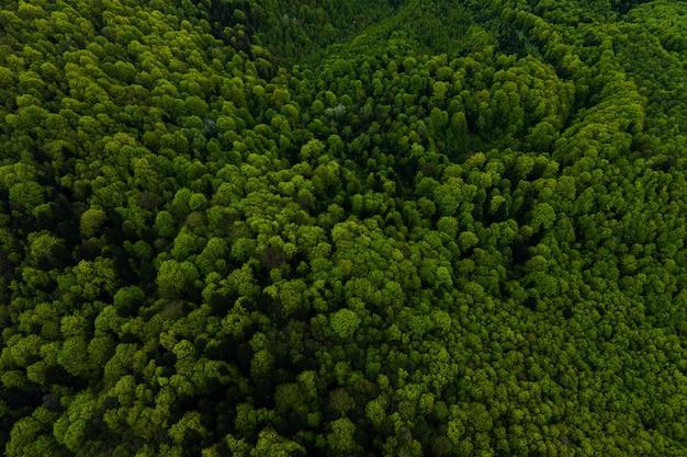 Vista aérea de pinheiros mistos escuros e floresta exuberante com copas de árvores verdes.