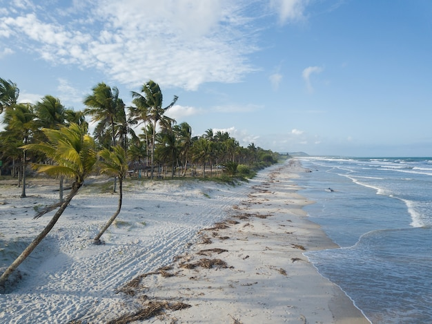 Vista aérea de praia deserta com coqueiros
