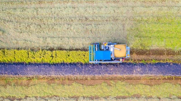 Vista aérea de topo da máquina colheitadeira trabalhando no campo de arroz de cima