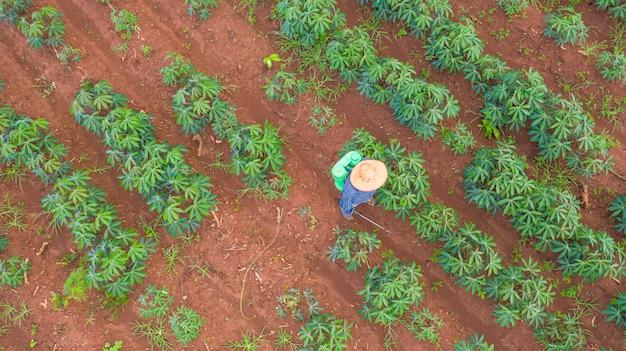 Vista aérea de topo dos agricultores que trabalham em fazendas de mandioca