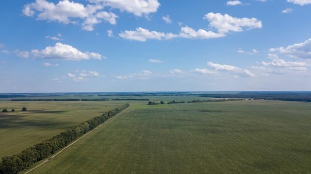 Vista aérea de um belo pôr do sol sobre os campos de milho verde - campos agrícolas