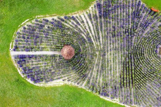 Vista aérea de um campo de lavanda com gazebo no parque.