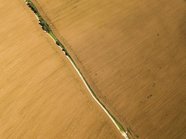 Vista aérea de um campo dourado de colza madura com uma estrada