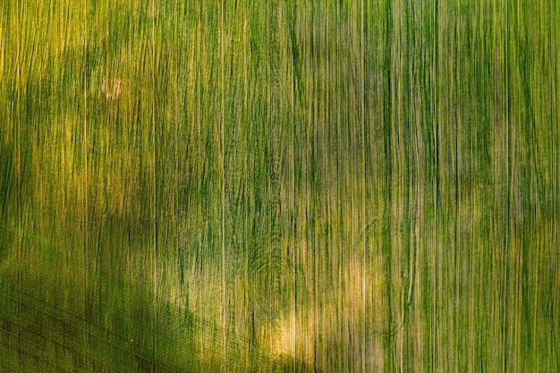 Vista aérea de um campo verde. campanha de semeadura em belarus.nature of belarus. próprio campo verde ao pôr do sol.