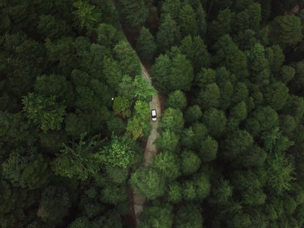 Vista aérea de um carro andando por uma estrada na floresta com árvores verdes altas e densas