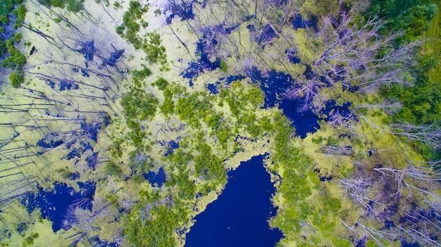 Vista aérea de um pântano ou pântano cercado por árvores brancas e magras com algumas gramíneas verdes