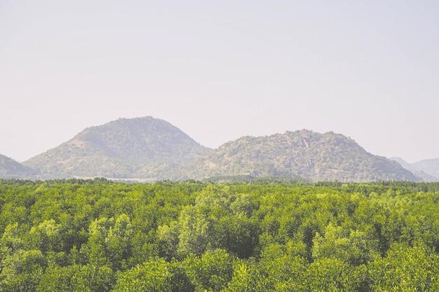 Vista aérea de um rio de belas paisagens naturais em uma floresta de mangue e montanhas na província de phang nga, tailândia