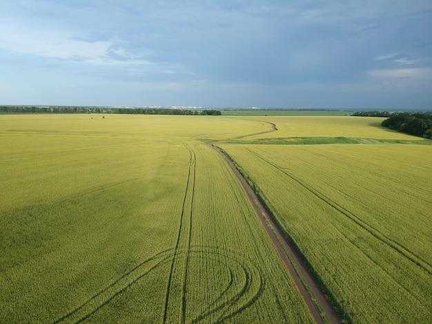 Vista aérea de uma área rural verde com estrada