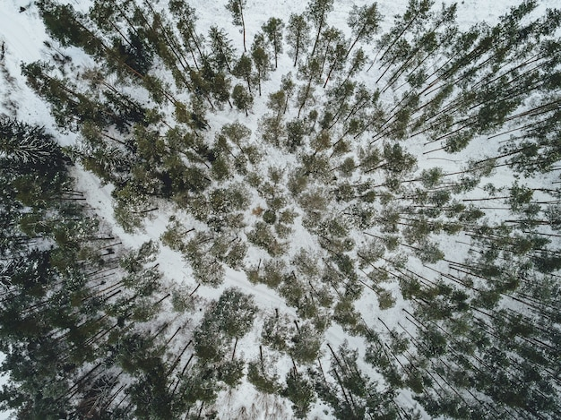Vista aérea de uma bela paisagem de inverno com pinheiros cobertos de neve