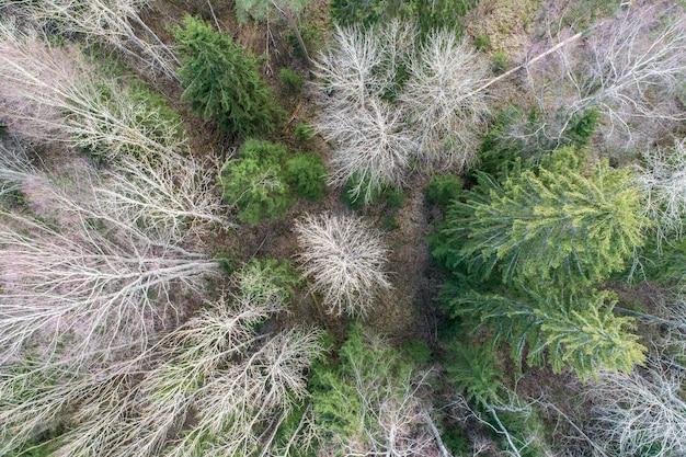 Vista aérea de uma densa floresta com árvores nuas de inverno e folhas caídas no chão