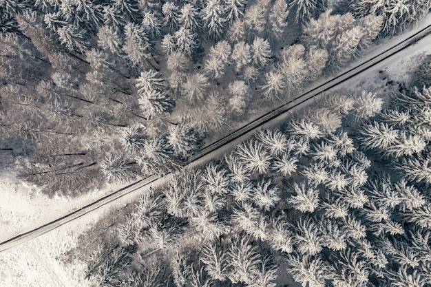 Vista aérea de uma estrada entre árvores em uma floresta de inverno