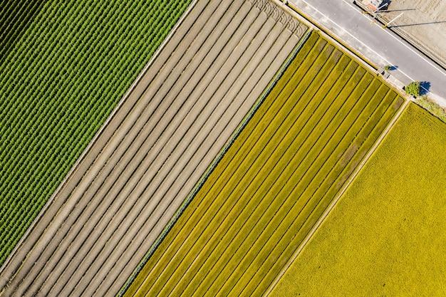 Vista aérea de uma fazenda colorida com vegetais e arroz em changhua, taiwan